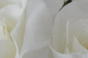 roseheader