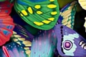 butterflyheader